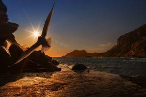 flying-bird-at-the-dorn