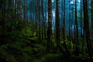 primeval-forest