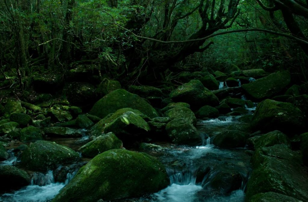 river-in-deep-forest