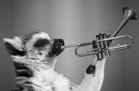 animal-playing-trumpet