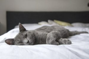 cat-lying-on-bed