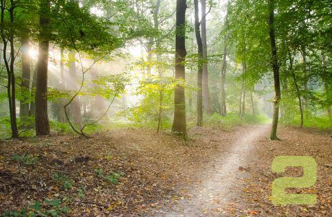 mountain-path-2