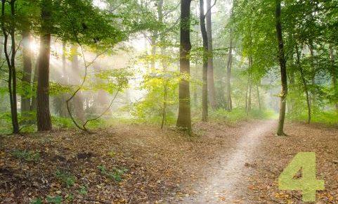 mountain-path-4