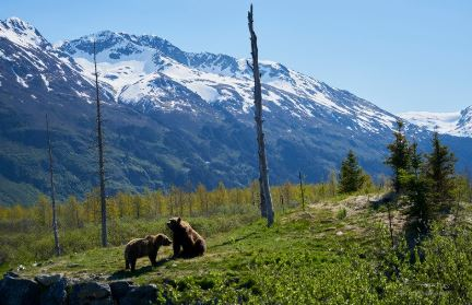 two-bears-on-the-hill
