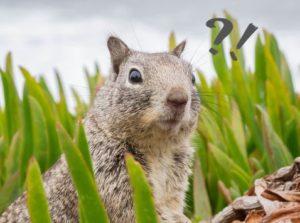 surprising-squirrel