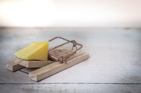 cheesy-trap